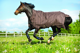 Rhino Wug Turnout Blanket by Horseware Ireland
