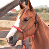 Two-Tone Halter by Classic Equine