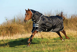 Amigo Stock Horse Turn Out by Horseware Ireland